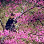 địa điểm ngắm hoa mùa xuân