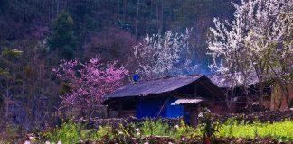 cảnh đẹp mùa xuân ở Việt Nam